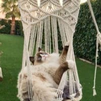 Hamac Bohême pour chat et petit chien dans le jardin