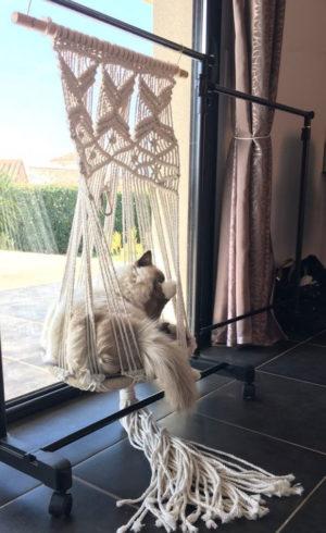 Hamac Bohême pour chat et petit chien dans le salon